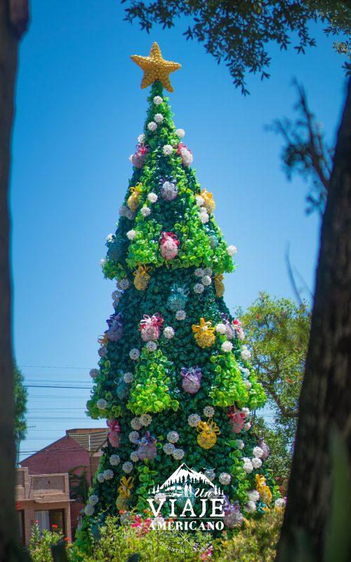 Flor de Árbol de Navidad en la Plaza principal