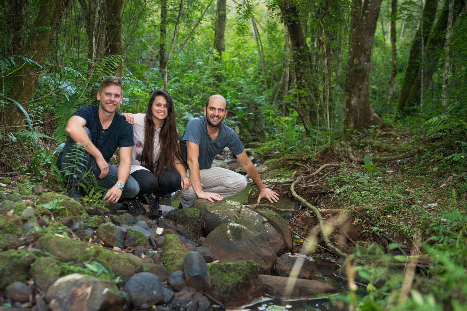 Bosque Misiones Selva