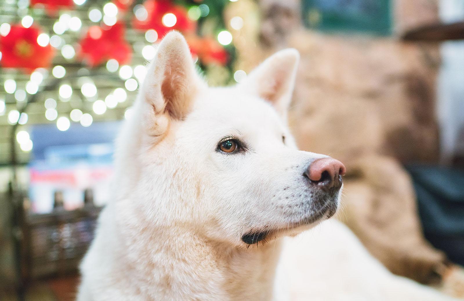 Perros Samaipata